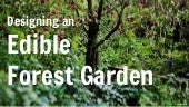 How to design a beautiful edible forest garden