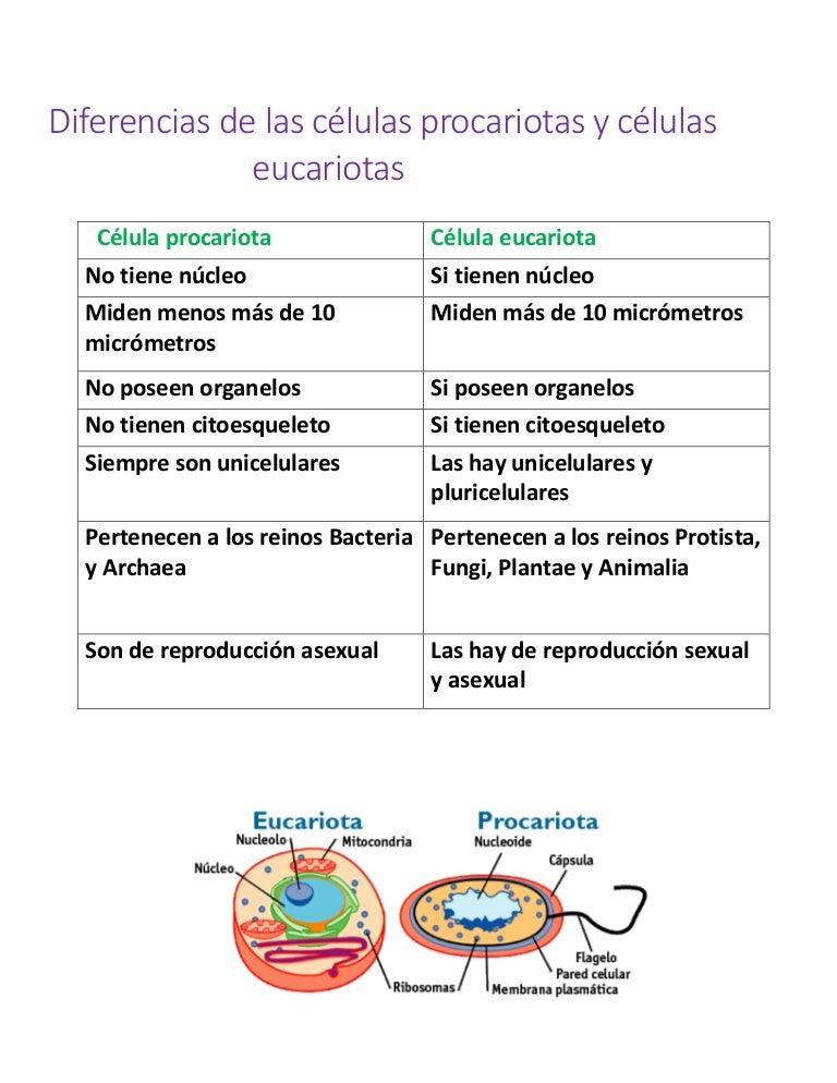 Diferencias De Las Células Procariotas Y Células Eucariotas