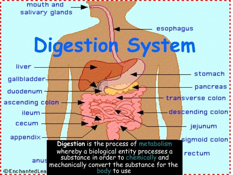 digestion system hinojosa