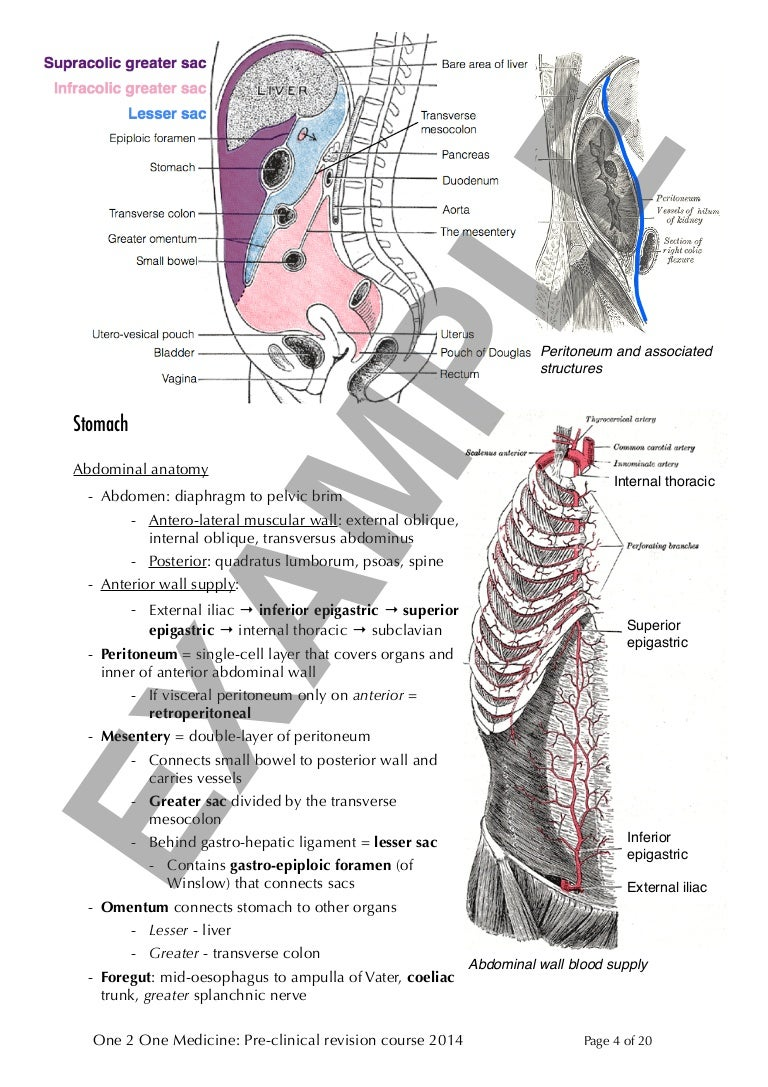 Digestive System Sample