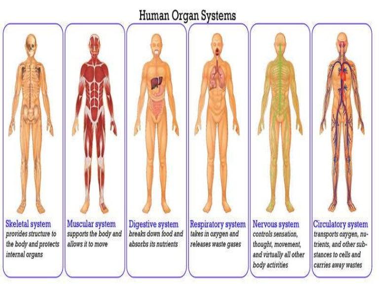 Digestive System Gr 6