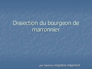 Dissection bourgeon
