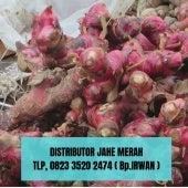 Distributor Jahe Merah Terbaik Tlp 0823 3520 2474 Jpg 20