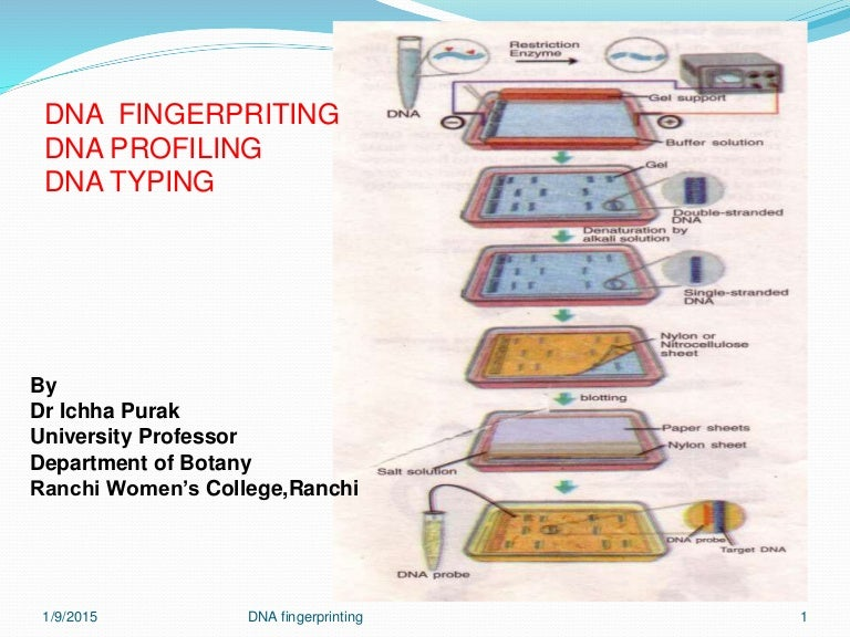 Fingerprinting 7 jan 2015 dna fingerprinting 7 jan 2015 ccuart Images