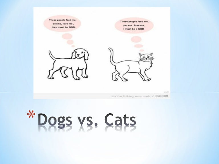 dogs are better than cats persuasive speech