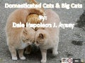 Domestic cats and big cats