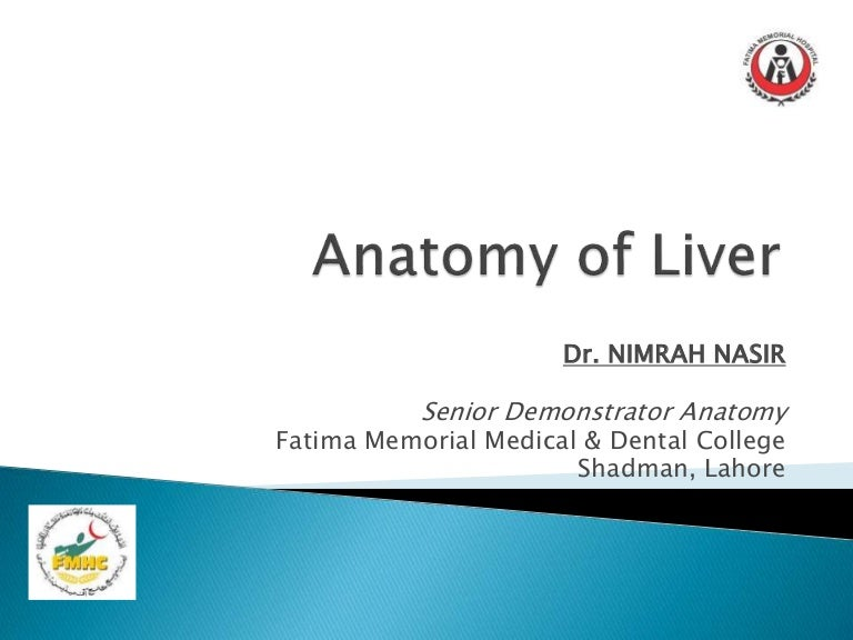 Anatomy Of Liver Presentation