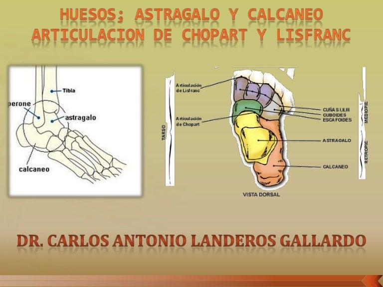 ANATOMIA - Articulacion Chopart y Lisfranc