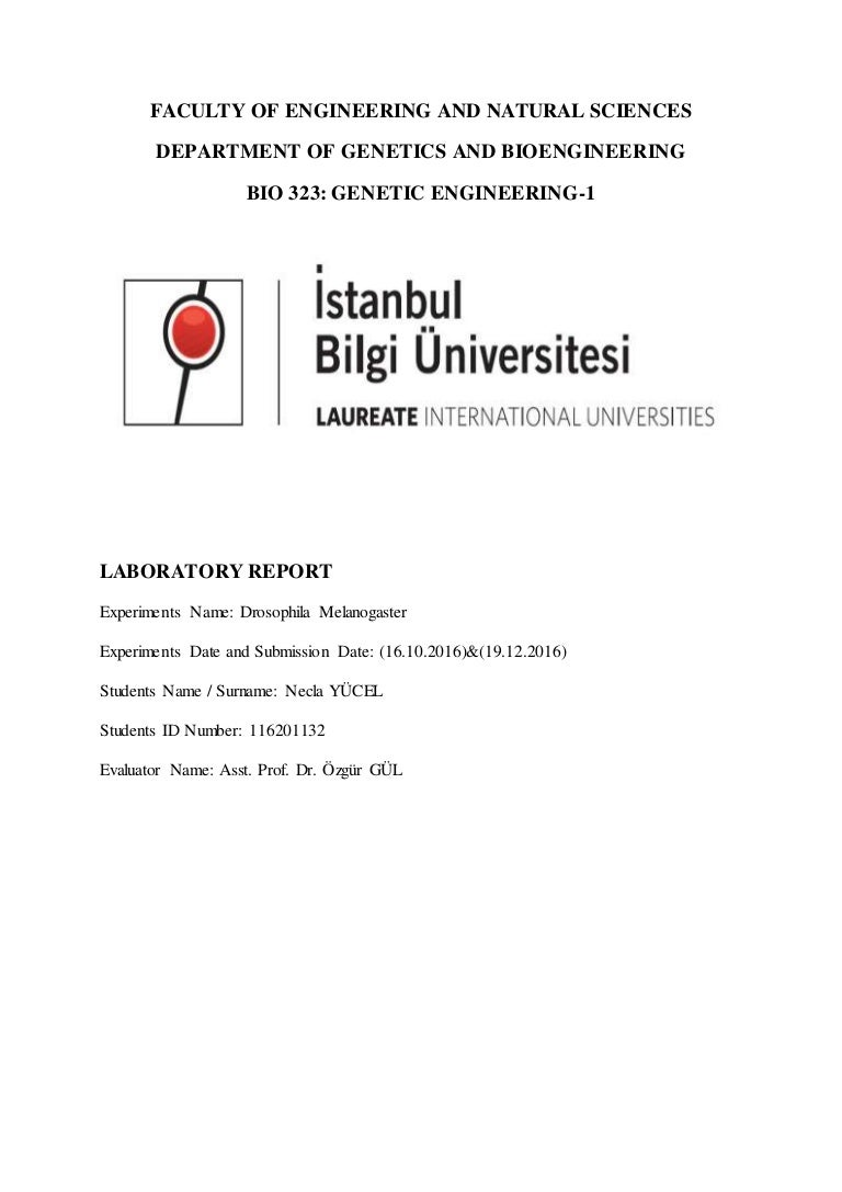 drosophila laboratory report