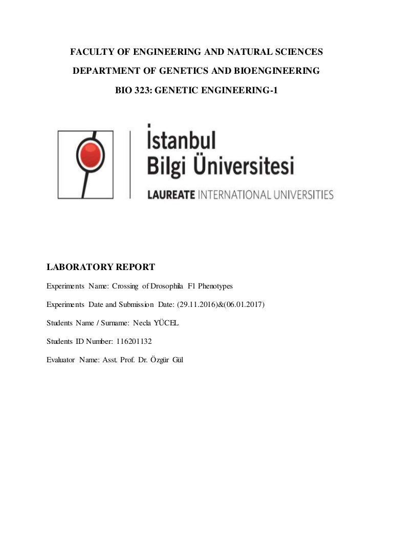 drosophila laboratory report 2