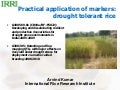 GRM 2011: Practical application of markers to breed drought-tolerant rice