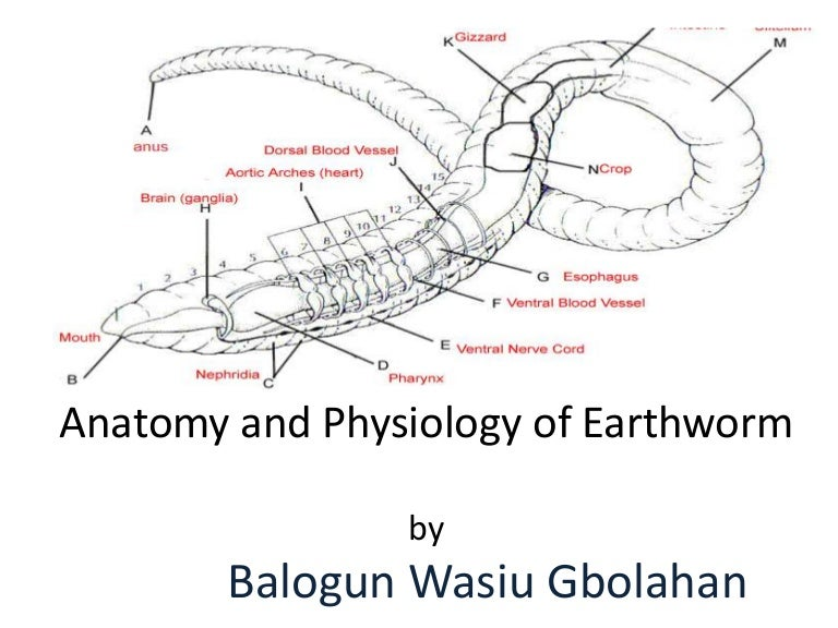 Earthwormpresentation 160630025402 Thumbnail 4gcb1467255347