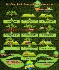 Easy steps for the process of tree transplanting