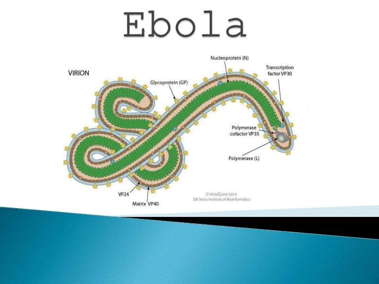 Ja çfarë shkaktoi Iluminati (Rendi i Ri Botëror) Ebolachandigarhseminar-150411155018-conversion-gate01-thumbnail-4