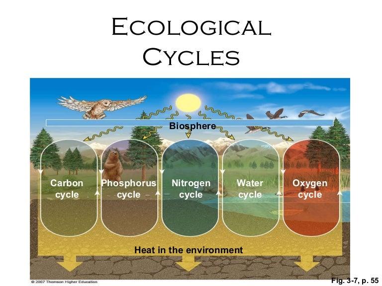 Ecological cycles – Phosphorus Cycle Worksheet