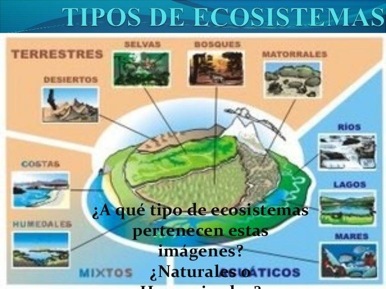 Tipos de ecosistemas for Cuantos tipos de arboles hay en el mundo