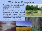 Eco system