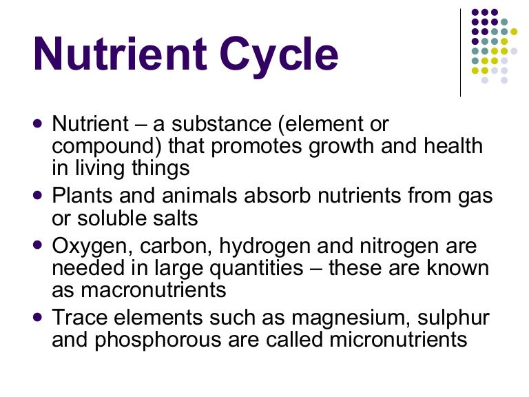 Ecosystems 3 Nutrient Cycle