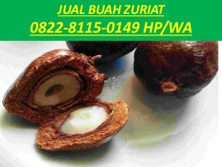 Jual Buah Zuriat Makassar,0822-8115-0149