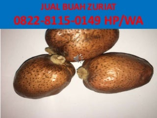 Harga Susu Buah Zuriat Khawlah,0822-8115-0149