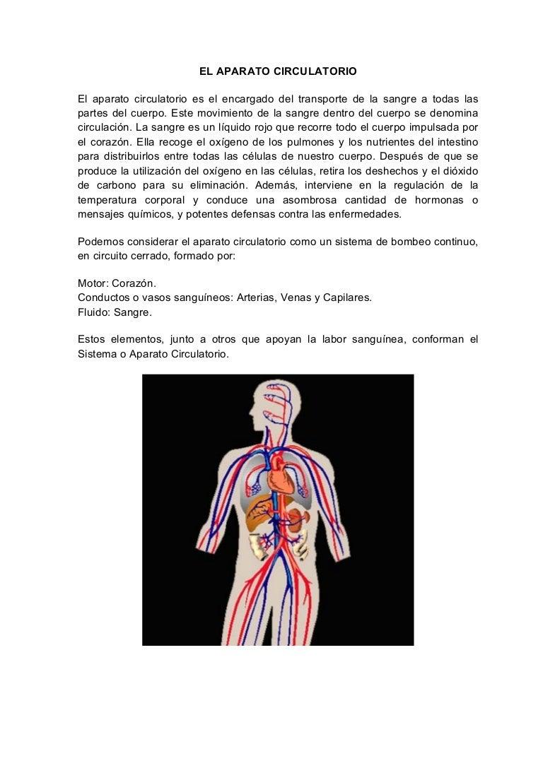 Circuito Sanguineo : El aparato circulatorio