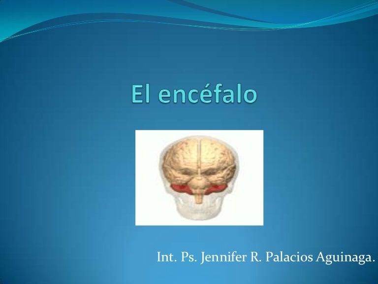 El encefalo sus partes y funciones for Partes de un vivero forestal