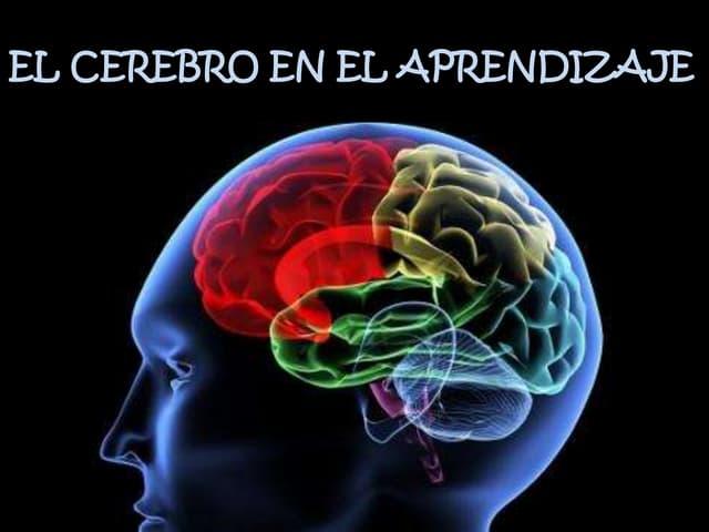 El cerebro en el aprendizaje