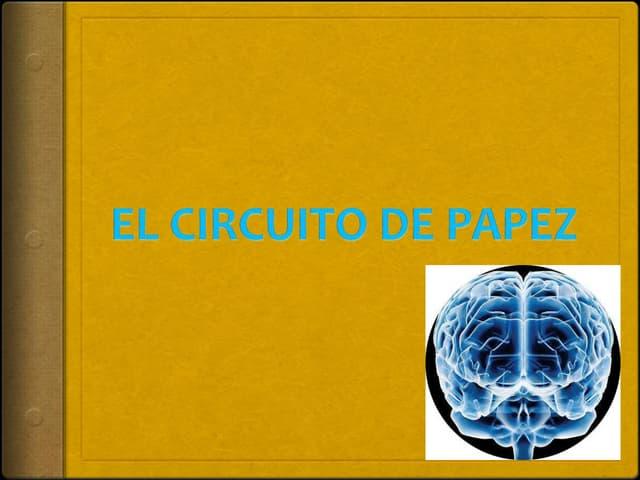 Circuito De Papez : Circuito di papez foto immagine stock  alamy