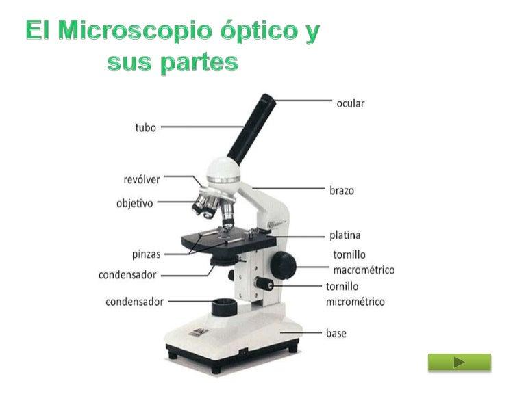 Galerry partes del microscopio
