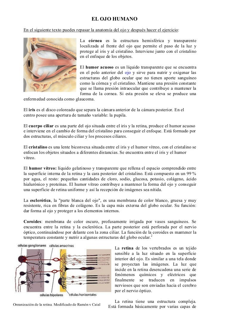 elojohumano-110224112252-phpapp01-thumbnail-4.jpg?cb=1298547019