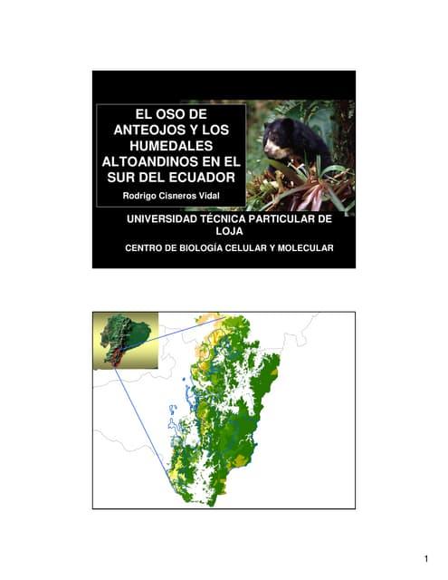 El Oso De Anteojos Y Los Humedales Altoandinos Del Sur Del Ecuador