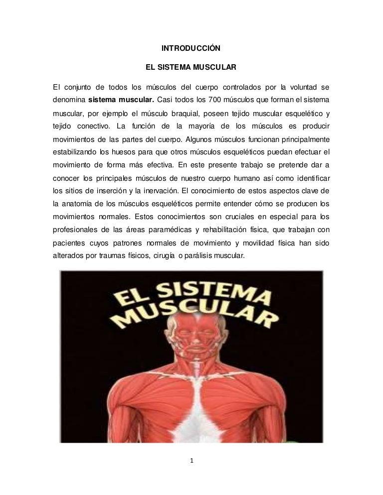 elsistemamuscular-161228202744-thumbnail-4.jpg?cb=1482957009