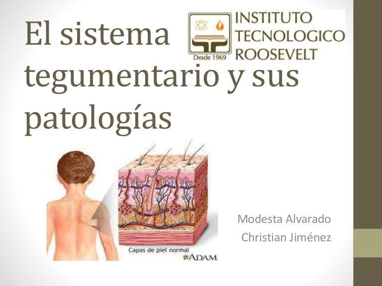 El sistema tegumentario y sus patologías