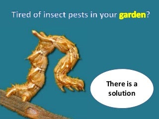 Natural pest control method for organic gardeners