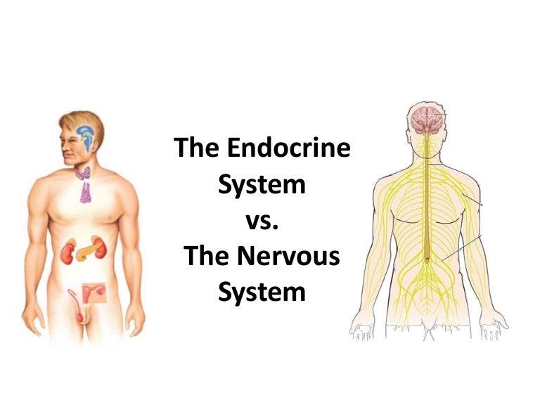 Endocrine System Endocrine V Nervous System