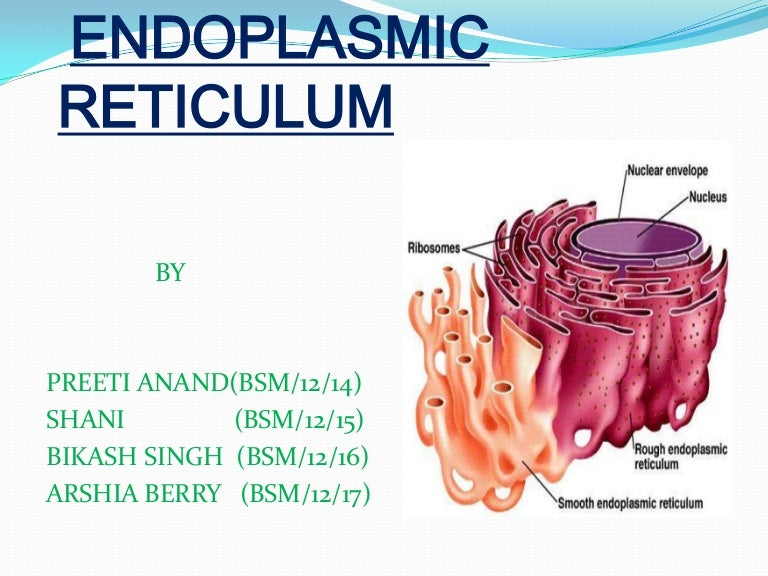 Endoplasmic reticulum What Is Endoplasmic Reticulum