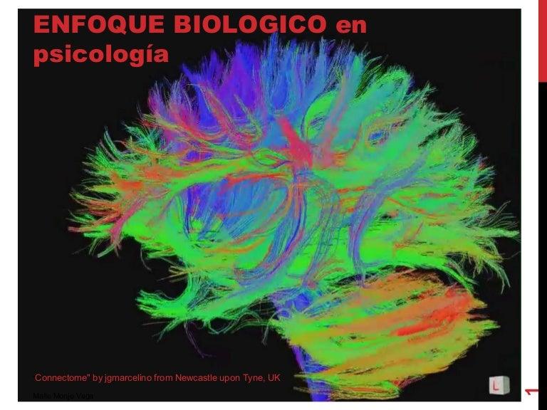 Enfoque biológico en psicología