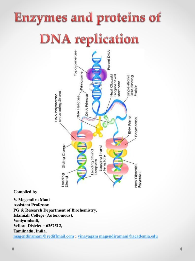 Enzymes of dna replication pooptronica