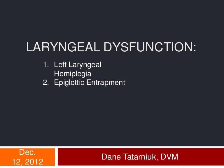 Equine Larynx