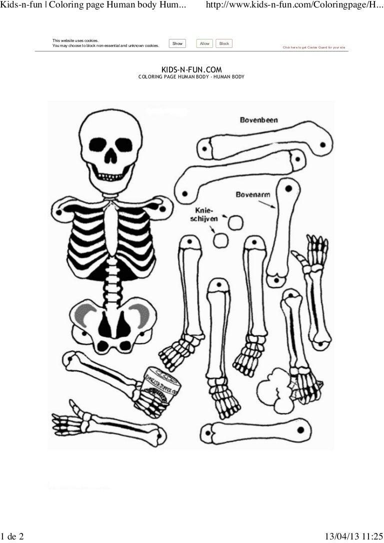 esqueleto x montar