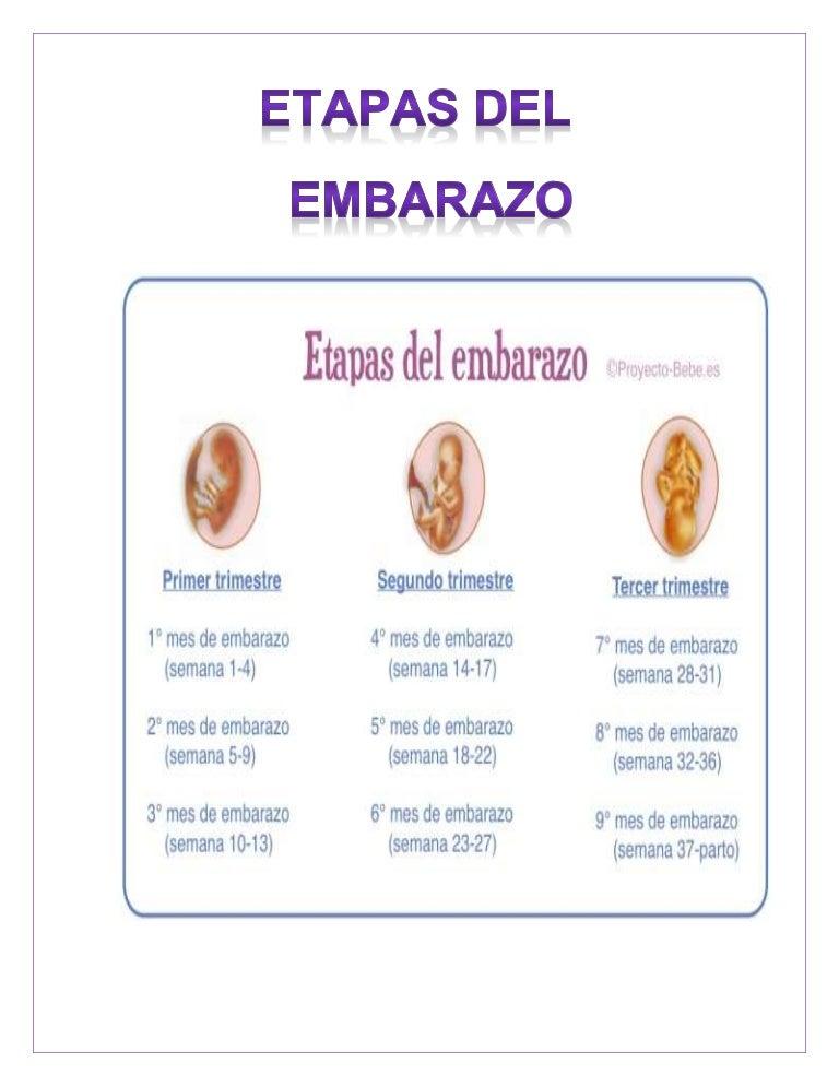 Hermosa Anatomía Del Embarazo Semana A Semana Ideas - Imágenes de ...