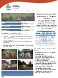 Small ruminant value chain development in Doyogena, Ethiopia