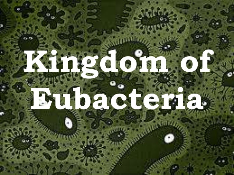 Are eubacteria asexual reproduction