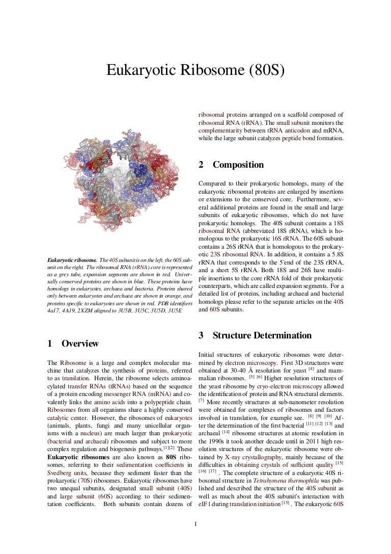 Eukaryotic Ribosome  80 S