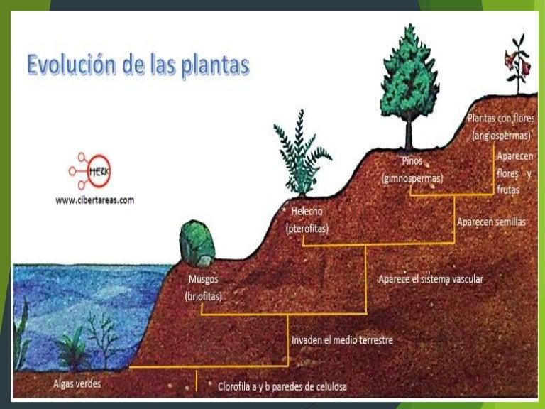Evoluci n de las plantas for Origen de las plantas ornamentales