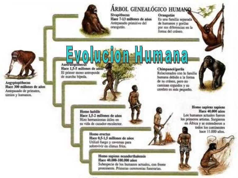 Evolucion Humana