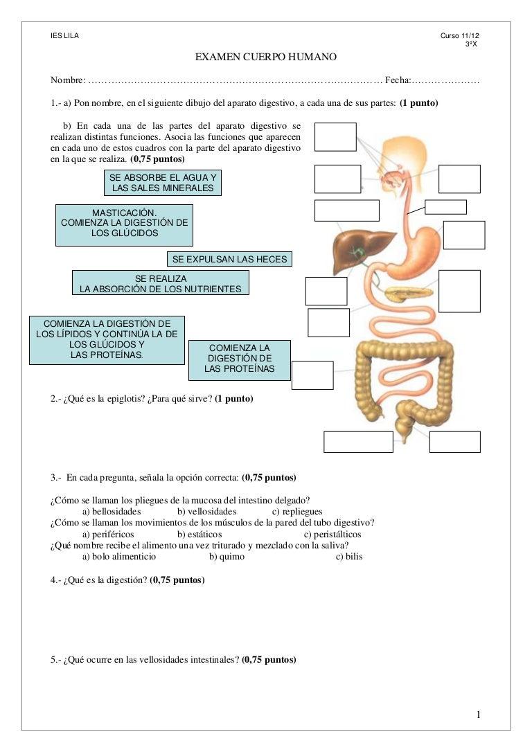 Examen cuerpo-humano