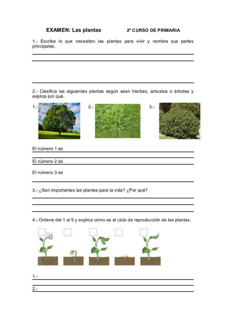 Examen Las plantas Conocimiento del Medio 2º de Primaria