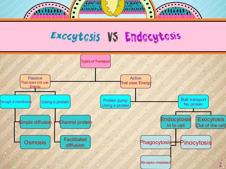 Exocytosis and Endocytosis {Best one}