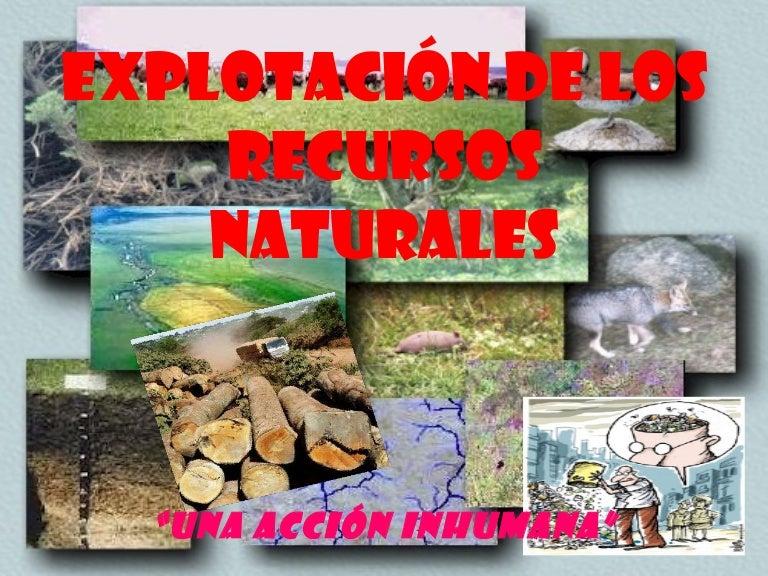 Explotaci n de los recursos naturales - Aromatizantes naturales para la casa ...